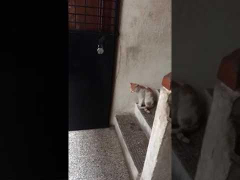 Intelligence in a cat