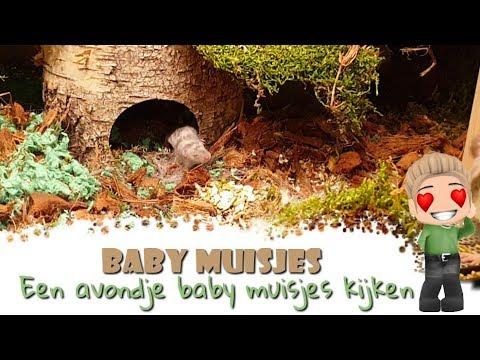 🐁🍼 Baby Muisjes Kijken met Max