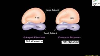 More Difference between Prokaryotic and Eukaryotic Cells