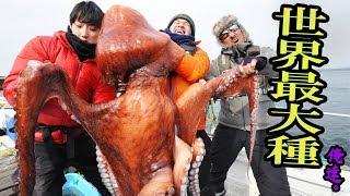 【Octopus fishing】巨大すぎる水ダコを釣り上げる!