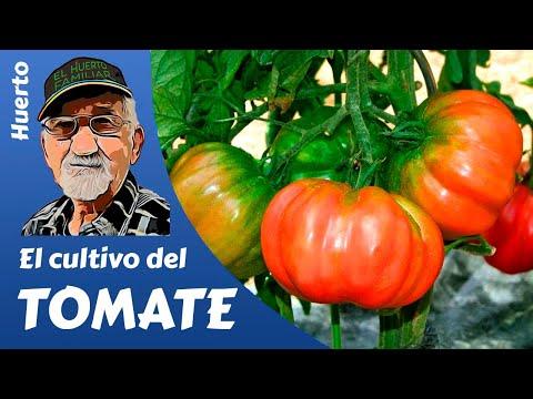 EL CULTIVO DEL TOMATE, GROWING TOMATOES (English subtitles). Guía completa en HD.