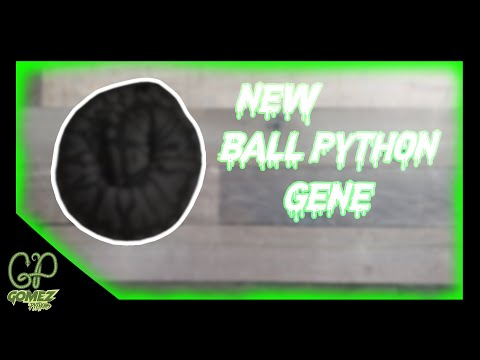 new-ball-python-gene-in-our-collection