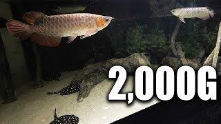 Accidental improvement on the 2,000G aquarium