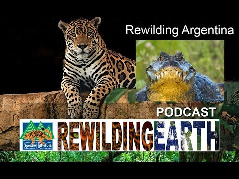 Episode 4: Rewilding Argentina With Conservation Land Trust