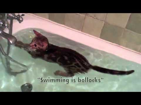 Swimming Kitten (Poco - Swims for Fun and Country)