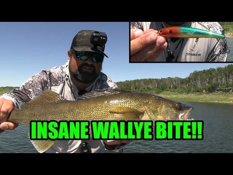 Download Crazy Shallow Water Walleye Bite! | Casting Cranks!