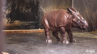 Splish Splash! Watch This Baby Rhino Can