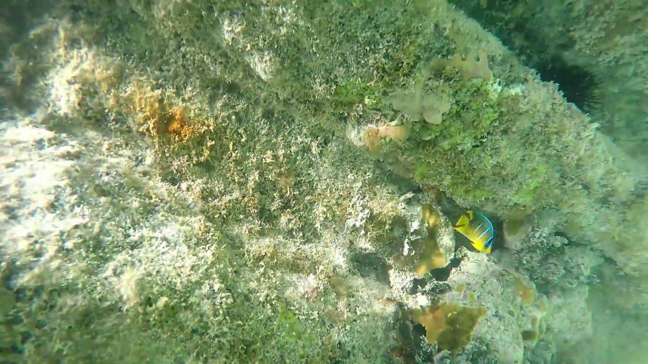 Snorkeling Higgs Beach Key West Florida