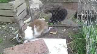 Casa para conejos y conejas