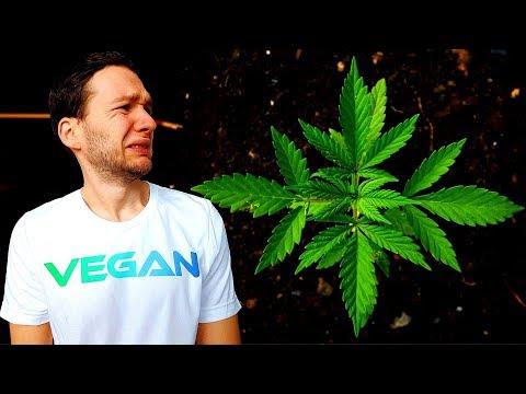 Cannabis UNGESUND! THC gegen KREBS! Marihuana VERURSACHT KREBS!