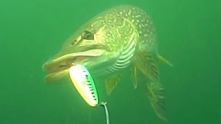 Video Big northern pike eats a spoon in this underwater video download MP3, 3GP, MP4, WEBM, AVI, FLV Agustus 2018