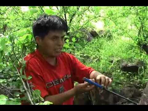 Investigaci n sobre los anillos de los rboles youtube for Investigacion de arboles