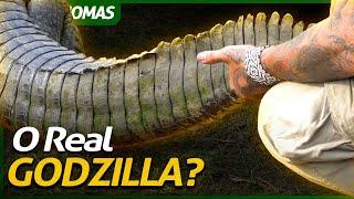 UM ANIMAL COM MAIS DE 300 MILHÕES DE ANOS DE EVOLUÇÃO! | BRASIL BIOMAS