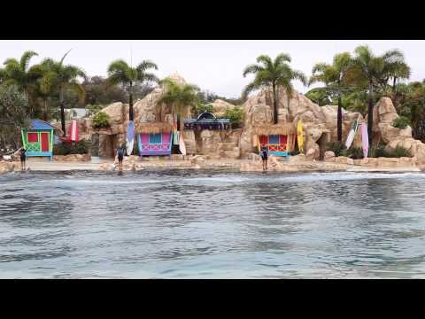 Sea World, Dolphin Show, Gold Coast, Australia