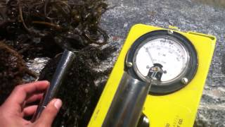Kelp radiation test Huntington Beach California
