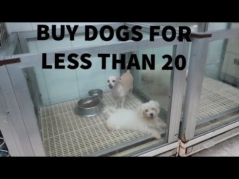 PET SHOPPING IN DUBAI |buy animals for cheap| *BOUGHT A RABB