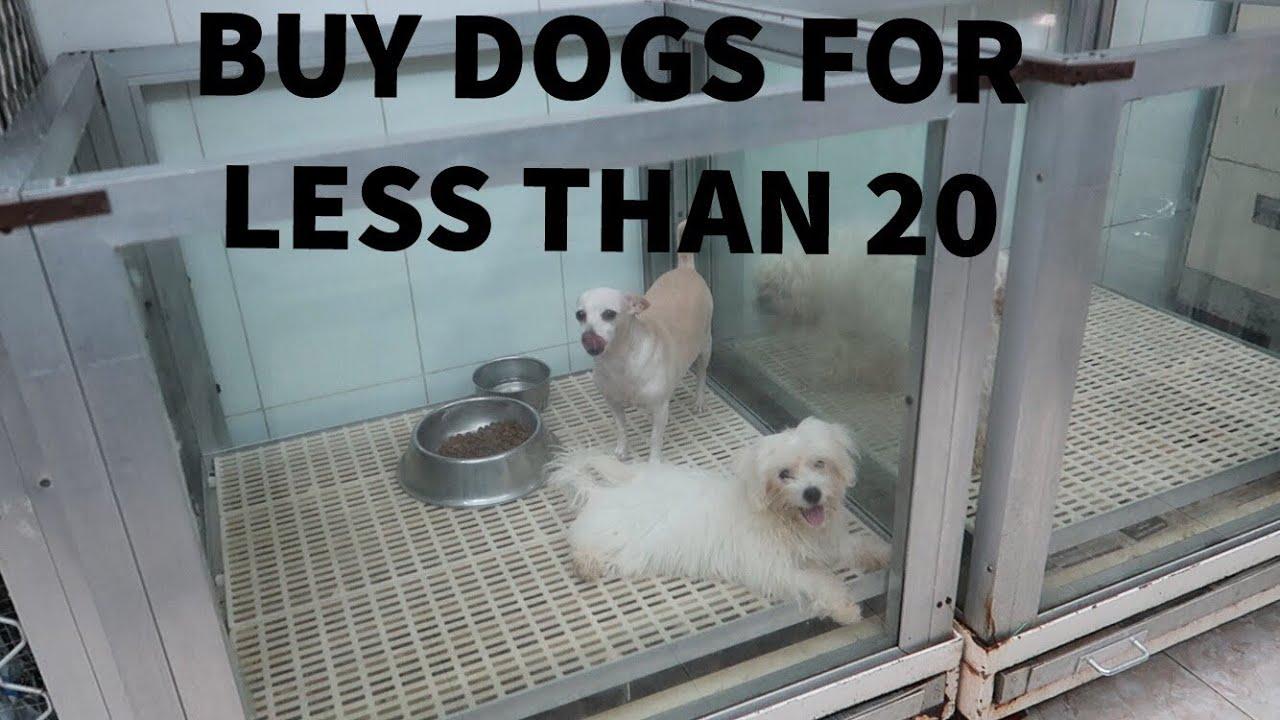 PET SHOPPING IN DUBAI |buy animals for cheap| *BOUGHT A RABBIT*