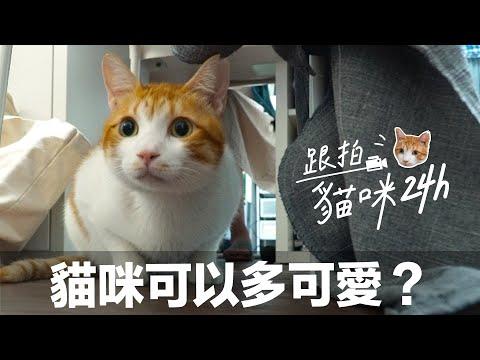 【跟拍貓咪24h-蛋捲篇】過的太爽了吧!拜託下輩子讓我當貓!