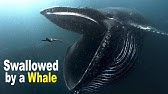 What to Do If You Are Swallowed by a Giant Whale?