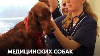 Собака спасает хозяйку от диабета