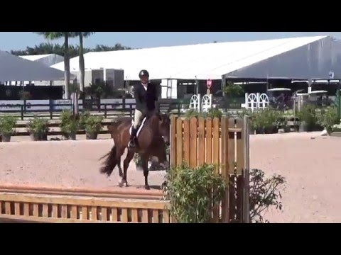 Balou's Brightside, Hunter for sale, Low Adult Hunters WEF 2016 SOLD