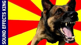 Dogs Barking Sound Effect (Free Download) and Growling