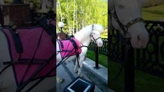 Султаша реагирует на ржание коней в колонке🐎🐎🐎.