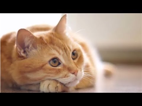 cat videos for kids | Sweet compilation of Cute  Kittens |  2018 PART-2
