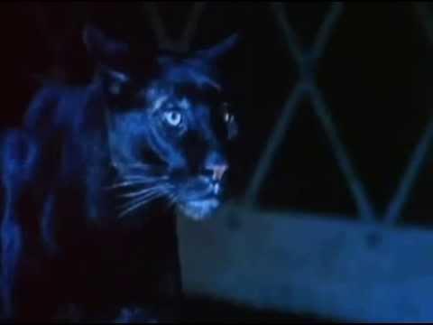 el beso de la mujer pantera cat people 1982 trailer hd