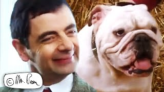 It's PUPPY DAY! | Mr Bean Funny Clips | Mr Bean Official