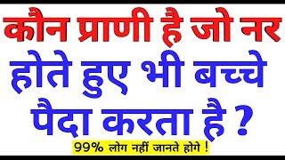 GK के 15 मजेदार सवाल जो आप शायद ही जानते होंगे Interesting Videos || GK in hindi #Gk #interestinggk