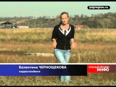 Ростовскую область атакуют ядовитые пауки-каракурты - YouTube