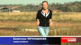 Ростовскую область атакуют ядовитые  пауки-каракурты