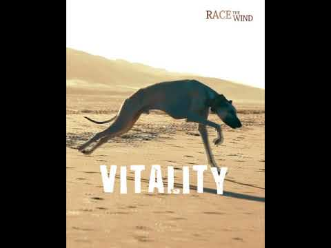 Race The Wind ▶ WHAT A SIGHTHOUND REALLY LOVES... • Galgo Levrier Lebrel Windhund Dog Chasse