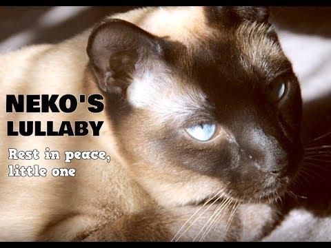 Neko's Lullaby - In Loving Memory