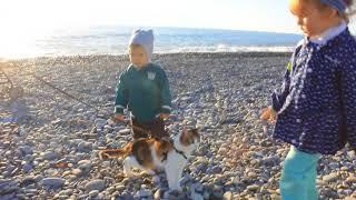 Прогулка с кошкой  у моря
