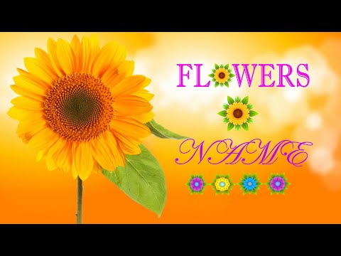 Learning Flowers Name for kids (17th Flowers Name)