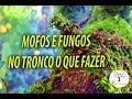 MOFOS E FUNGOS NO TRONCO O QUE FAZER