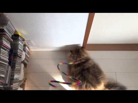 壁際で遊ぶふーちゃん - YouTube