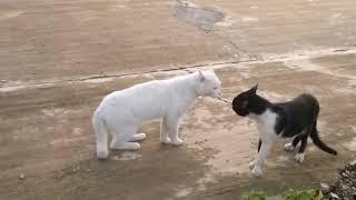 Мягкие и пушистые. Приколы с котами. Часть 1
