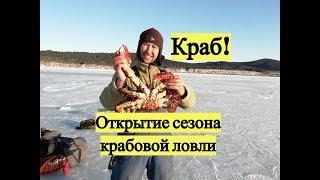 Краб Открытие сезона крабовой ловли Crab Catching A Crab Under The Sea Ice
