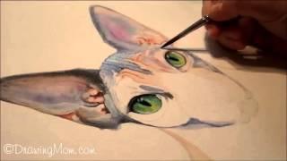 """Joy,"" Watercolor Sphynx Cat Portrait Speed Painting, by DrawingMom"