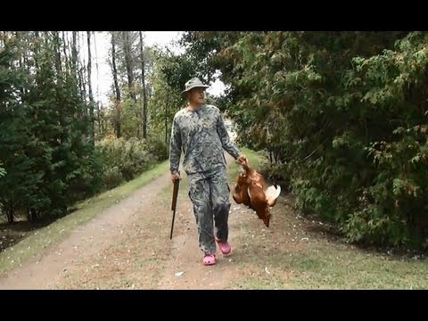 Aggressive Rooster Hunting Season Opens 22 Caliber Short Hollow Points #61 Raising Ducks Day 76