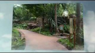 Disney Aulani - A Hawaiian Paradise