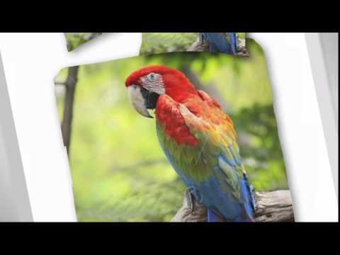 papagei---bettwäsche-im-digitaldruck-135x200cm-mako-satin---empressia.de