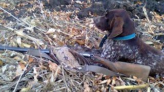 Охота на вальдшнепа с легавой осенью в конце ноября