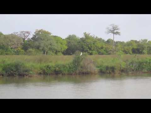 Gambia River, 26th December 2013