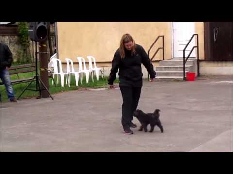 Kelly dog dancing bemutató