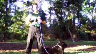 Dog Training: Teaching Not To Bark!