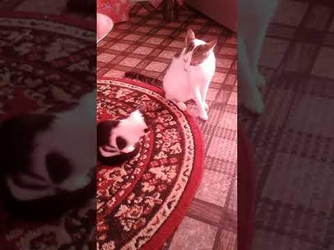 Dancing cats 😎😹🎵😀